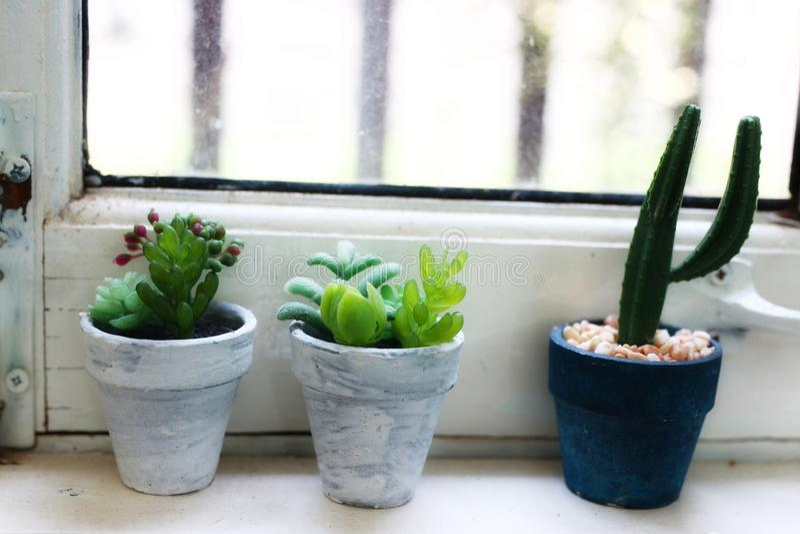 仙人掌和多汁植物植物的汇集在罐种植的罐仙人掌的安置在沿白色木窗口的架子 免版税图库摄影