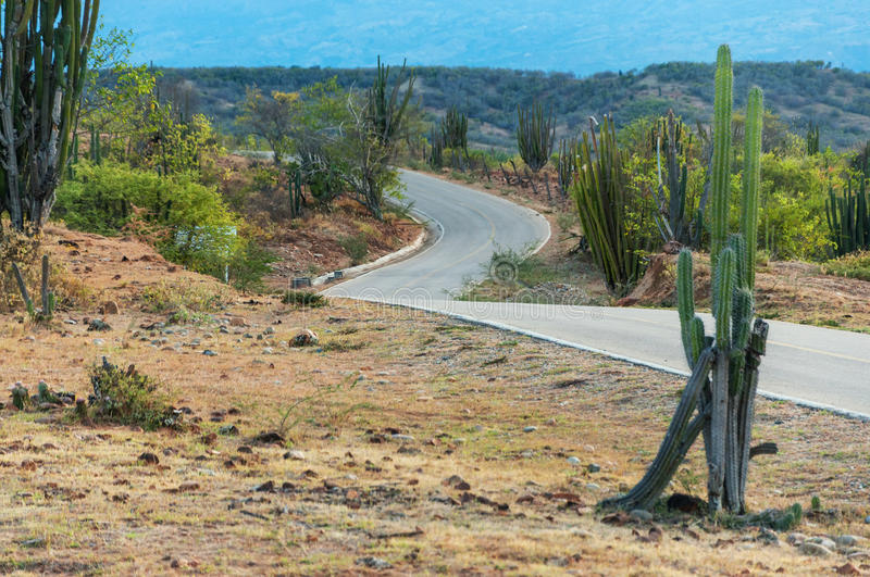 仙人掌和弯曲道路 库存图片