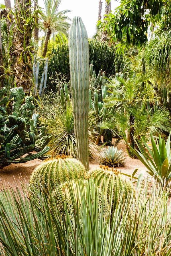 仙人掌和棕榈树品种  图库摄影