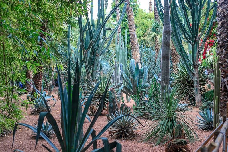 仙人掌和棕榈树在一自然环境在一个公园在Marakesh E 图库摄影