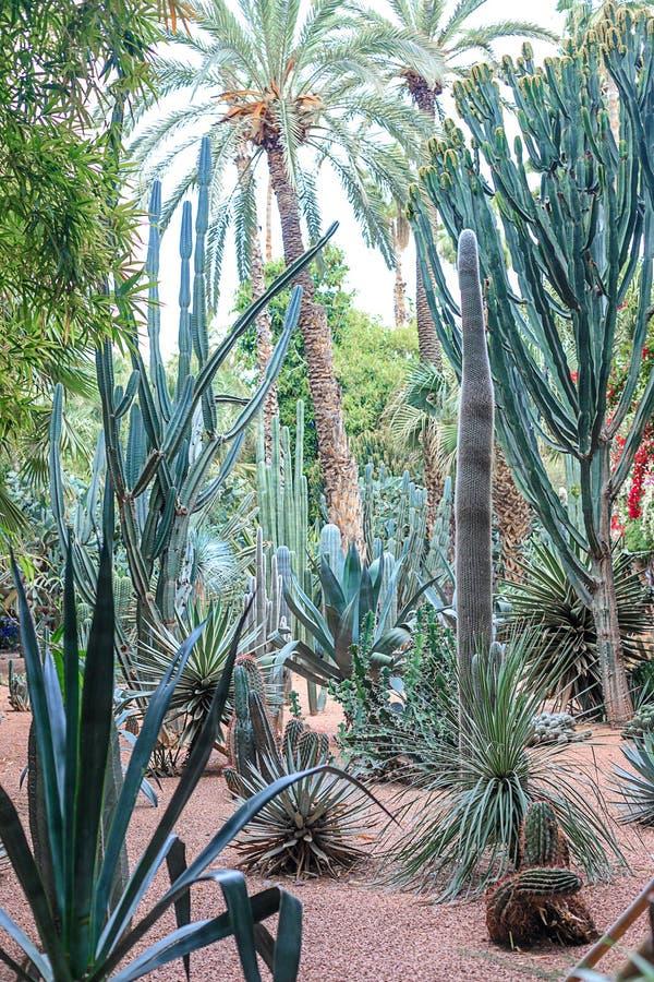 仙人掌和棕榈树在一自然环境在一个公园在Marakesh E 免版税图库摄影