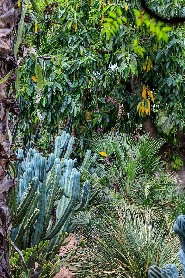 仙人掌和棕榈树在一自然环境在一个公园在Marakesh E 免版税库存照片