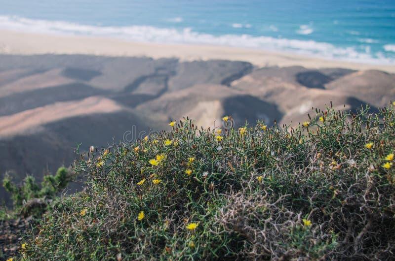 仙人掌和海洋风景花  免版税库存照片
