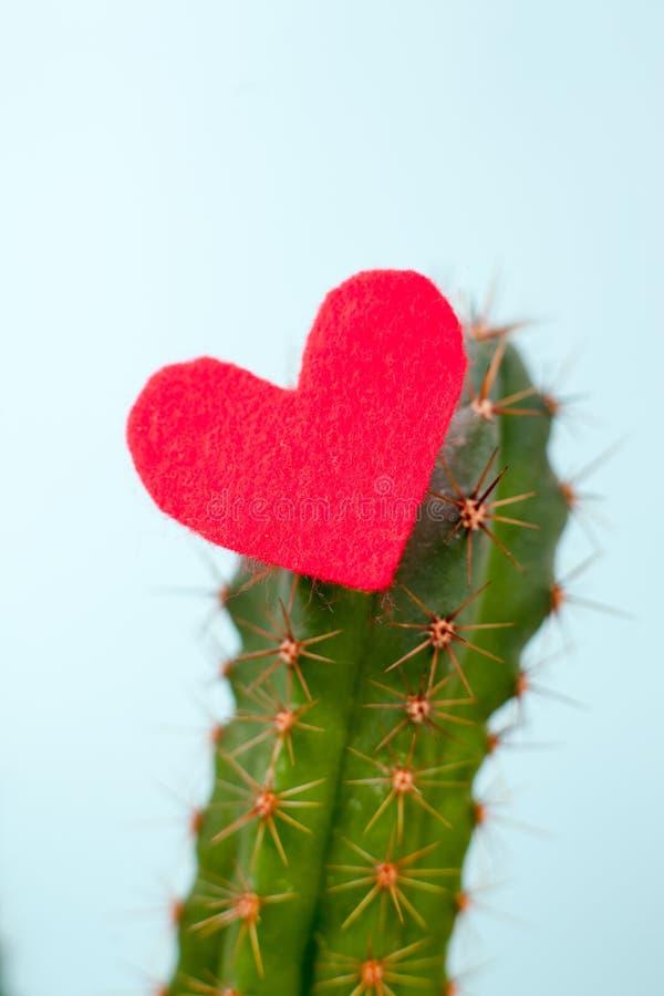 仙人掌和红色心脏对此,矛盾的感觉的概念,残暴的爱,不能接近的心脏 简单派,最后 免版税库存图片