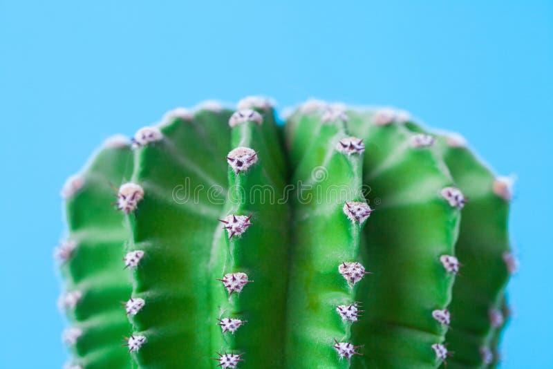 仙人掌和脊椎宏观照片在蓝色背景 关闭 库存照片