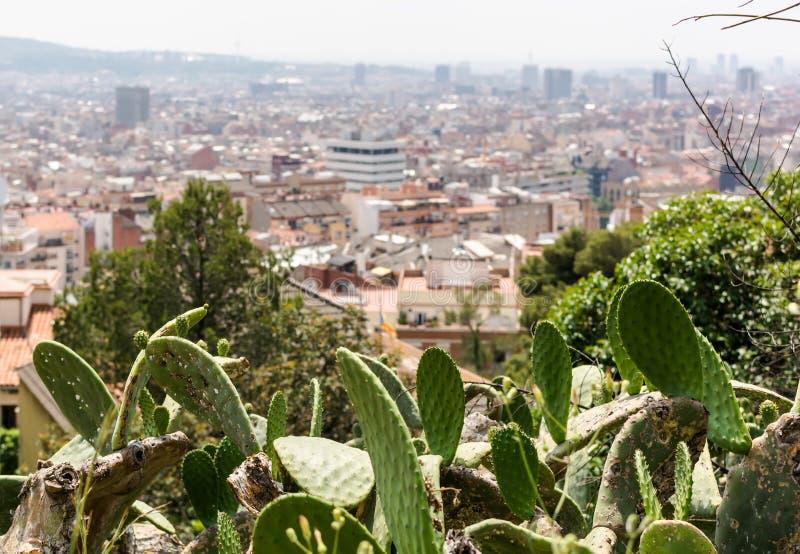 仙人掌在公园Guell有对巴塞罗那市的看法 库存照片