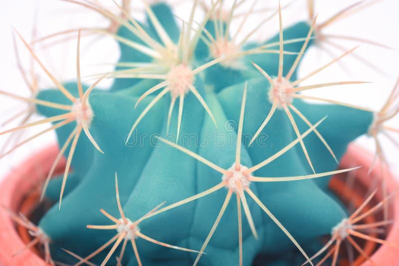 仙人掌宏观细节艺术时尚设计 仙人掌最小的概念 在白色背景的蓝色霓虹心情 时髦明亮的颜色 库存图片