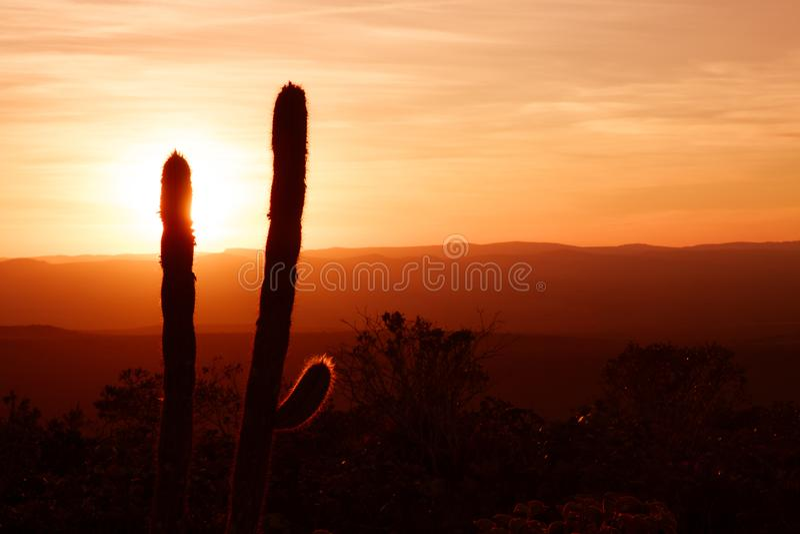 仙人掌树剪影和灌木在美好的带红色日落期间有遥远的山日落日出背景 库存图片
