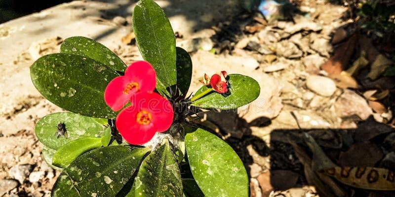 仙人掌植物 免版税图库摄影
