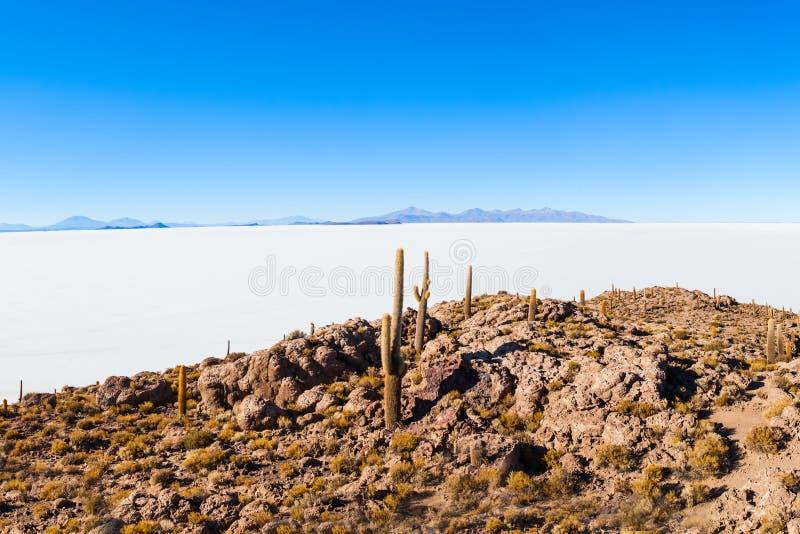 仙人掌海岛, Uyuni 免版税库存图片