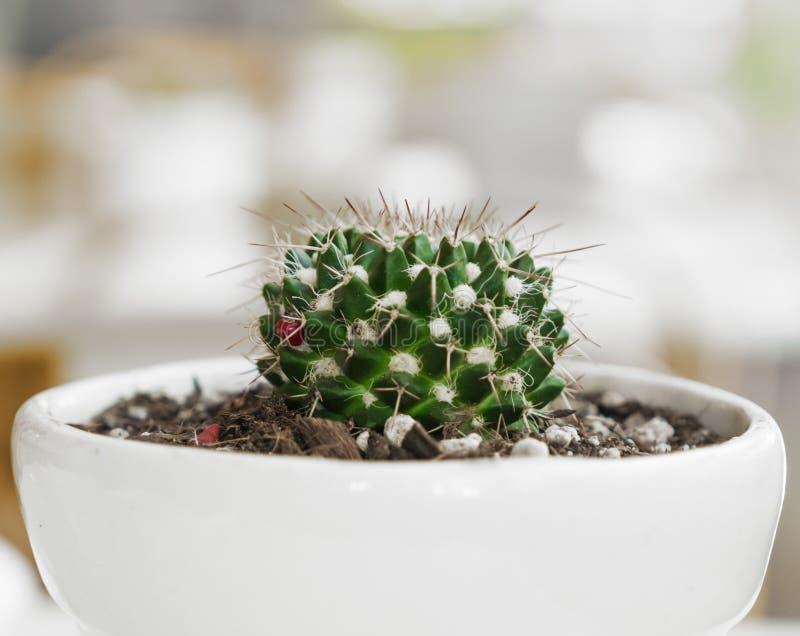 仙人掌盆的植物-时髦的自然装饰 免版税库存照片