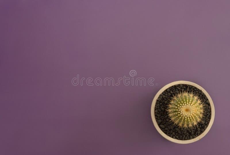 仙人掌顶视图在紫罗兰色背景的 免版税库存图片