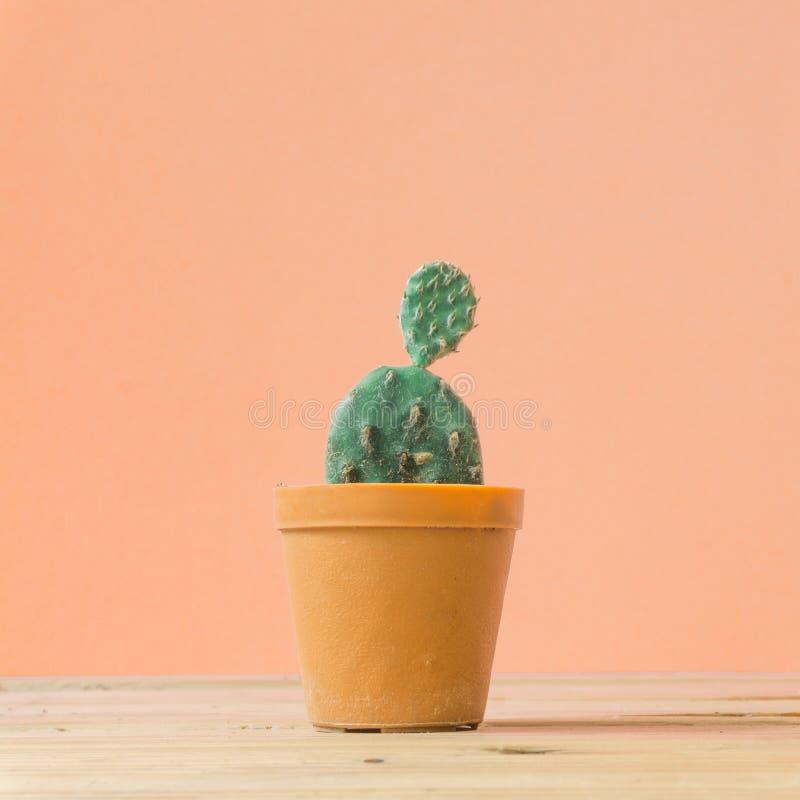 仙人掌 木桌和柔和的橙子上最有创意的静物 免版税库存图片