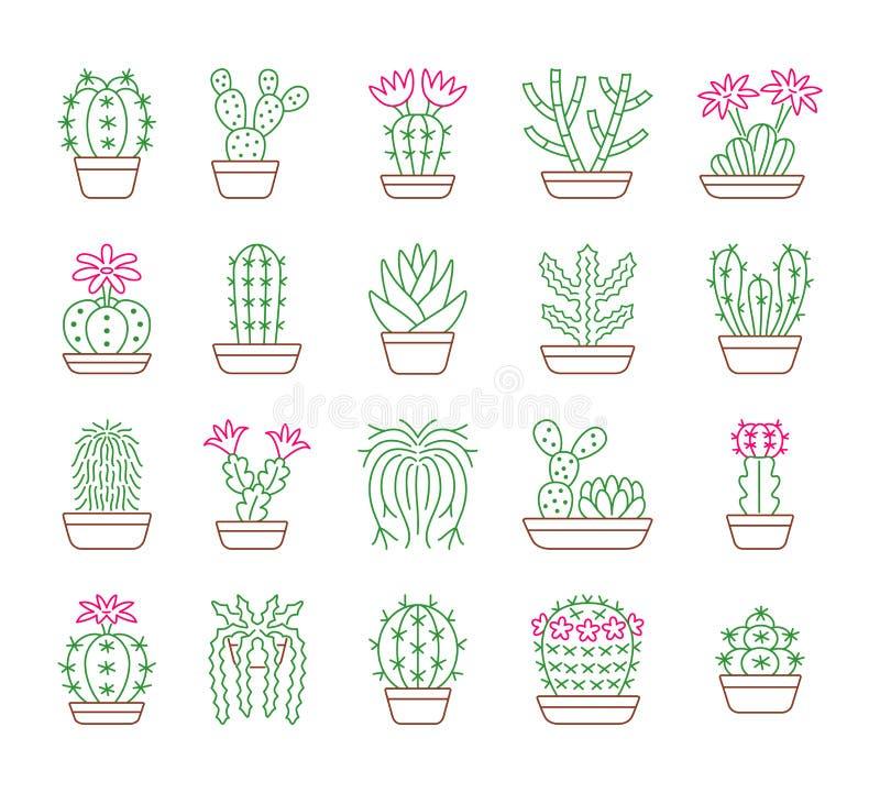 仙人掌 玻璃容器和假山花园的沙漠植物 线象 库存例证