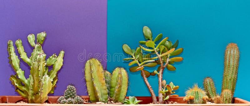 仙人掌 美术画廊时尚设计 最小的Stillife 蓝色心情 时髦明亮的夏天颜色 创造性的异常的样式 概念 Det 库存照片