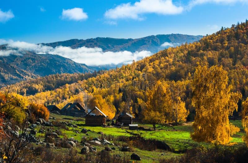 仙境秋天森林 库存图片