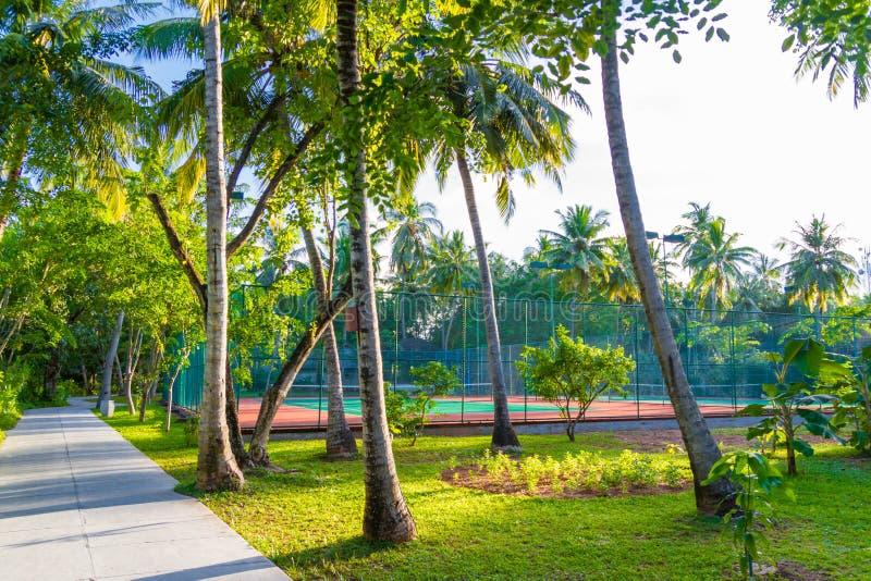 令人惊讶的体育和消遣背景作为网球场热带风景、棕榈树和天空蔚蓝的 在热带概念的体育 库存图片