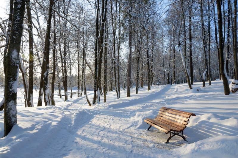 令人惊讶的冬天晴朗的冷淡的风景 免版税库存照片