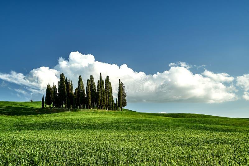 令人惊讶的托斯卡纳风景 绿草,天空蔚蓝,柏树 库存照片