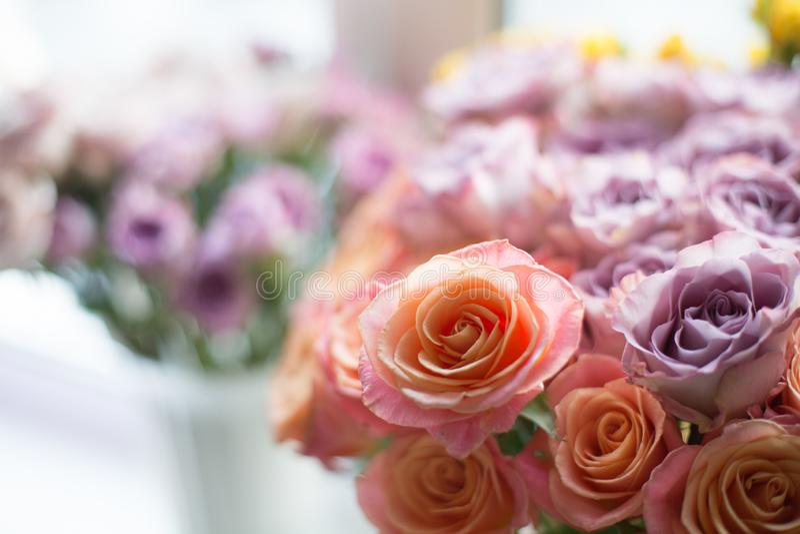 令人惊讶的珊瑚错过贪心和紫罗兰色回忆玫瑰在花瓶 可爱的花在窗口 库存照片