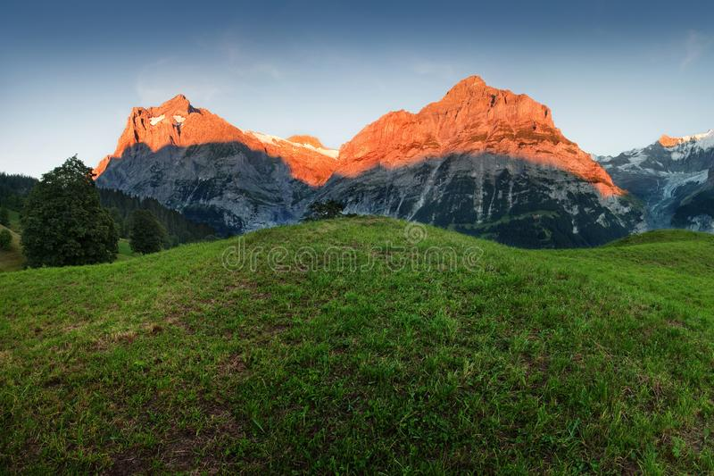 令人惊讶的瑞士高山山风景、绿色领域和高山与多雪的山峰在背景,格林德瓦,烟特勒根中 库存图片