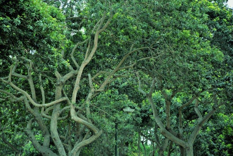 令人惊讶的绿色树和树干 免版税库存照片