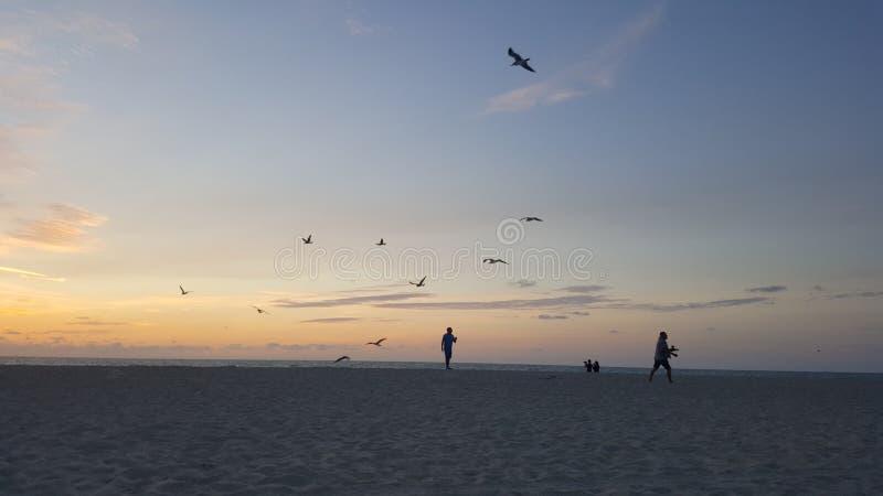 令人惊讶的自然和海滩在佛罗里达迈阿密 库存图片