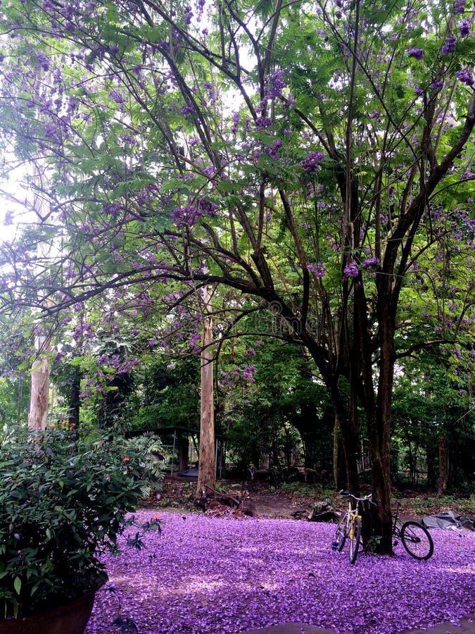 令人敬畏和梦想的紫色花地毯 库存图片