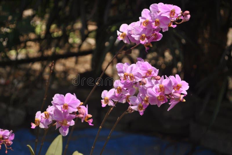 令人敬畏的花在庭院里 免版税库存照片