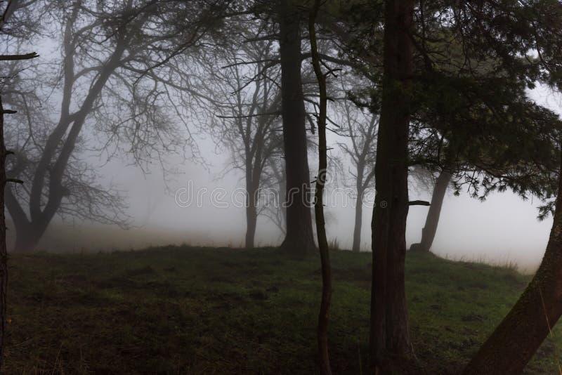 令人毛骨悚然的小山在森林在雾 免版税库存图片