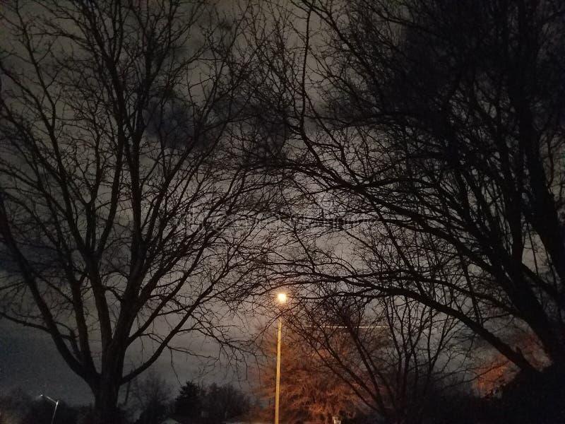 令人毛骨悚然的树和街灯 库存照片