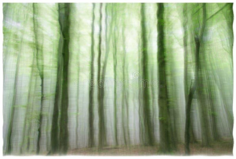 令人毛骨悚然的森林鬼魂 库存图片