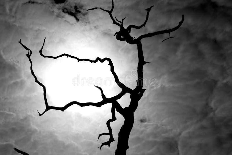 令人毛骨悚然的结构树 库存图片