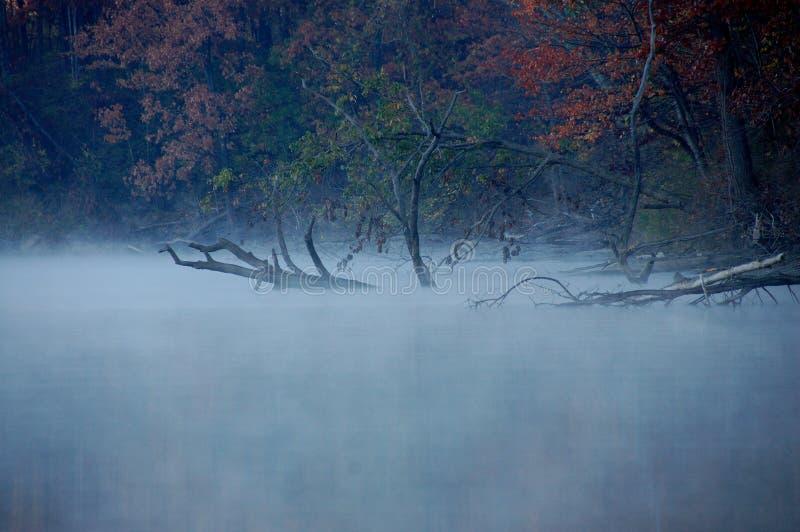 令人毛骨悚然的雾 库存照片