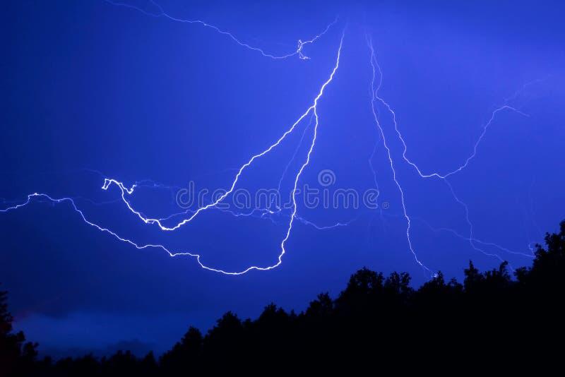 以一只蜘蛛的形式闪电在夜森林 免版税库存照片