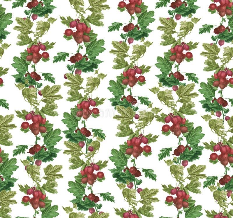 以在白色隔绝的一件镶边装饰品的形式鹅莓 E 皇族释放例证