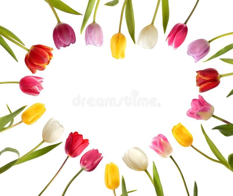 以心脏的形式不同颜色郁金香 免版税库存照片