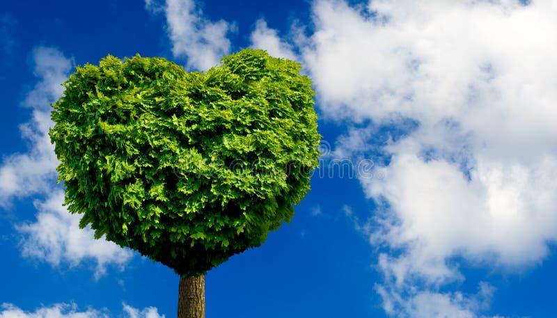 以心脏的形式树作为爱和热爱的标志 向量例证