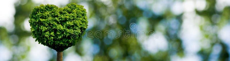 以心脏的形式树作为爱和热爱的标志 库存例证