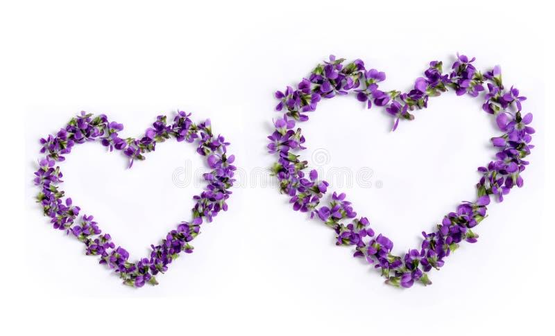 以心脏的形式精美春天紫罗兰在一白色backg 图库摄影