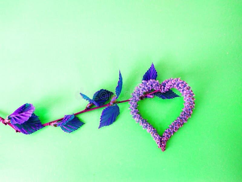 以心脏的形式,桦树开花开花耳环 免版税库存图片