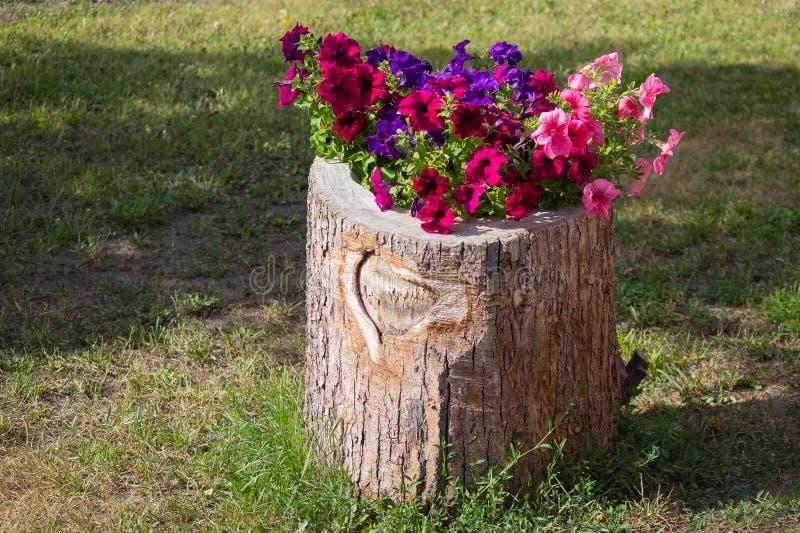 以树桩的形式花花圃 免版税图库摄影