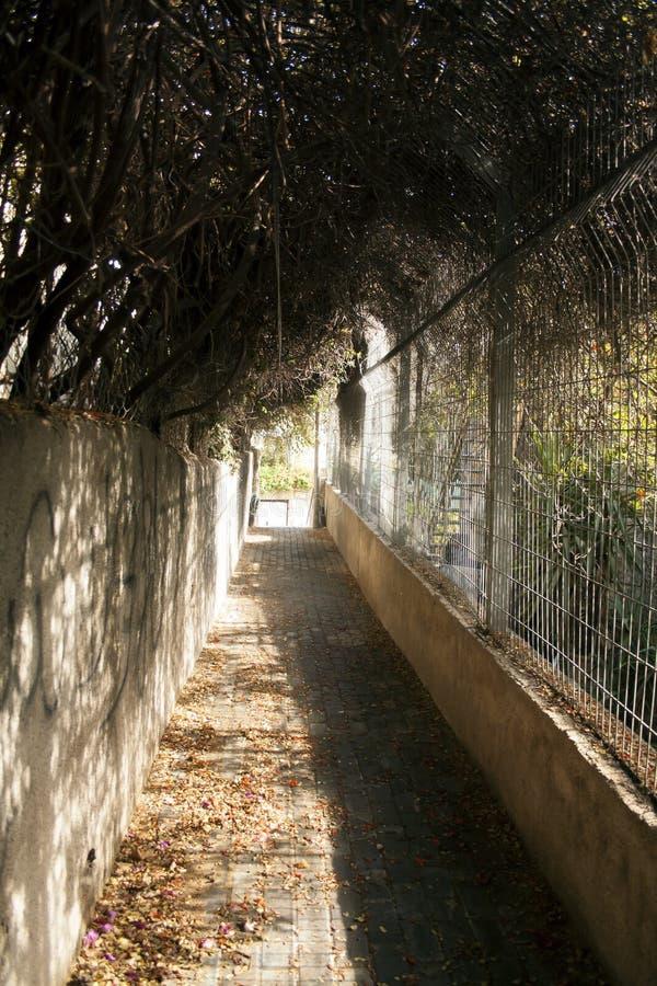 以色列耶路撒冷风景老城市 石路面,晴朗的autum 免版税库存图片