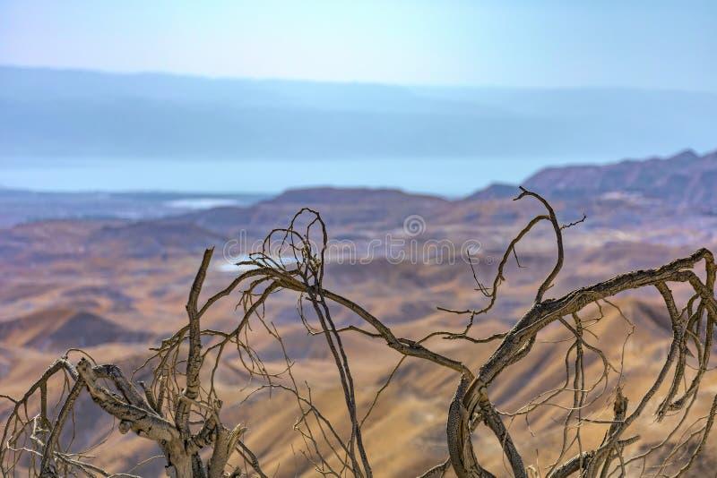 以色列,内盖夫,沙漠 关闭干燥分支在Neqev沙漠,有微弱的金黄黄色山a背景  免版税库存照片