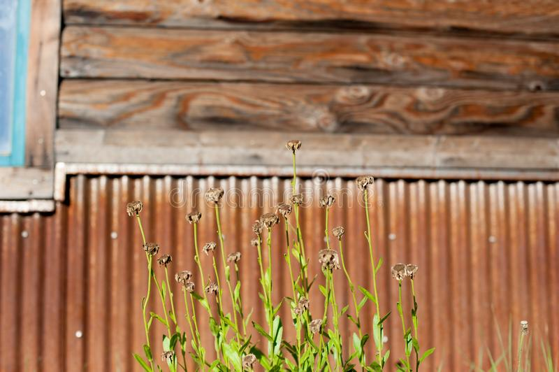 以长滩,加利福尼亚为基础的植物 加利福尼亚是否认识与好位于美国 在夏时,i 库存图片