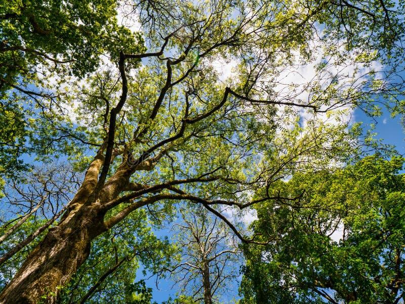 仰望树木 免版税库存照片