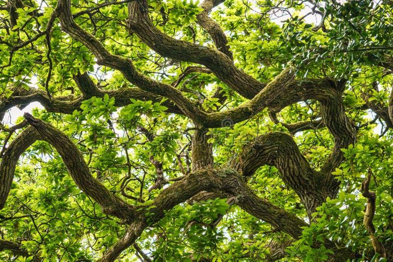 仰望树木 免版税库存图片