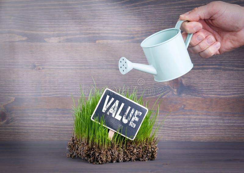 价值概念 在木背景的新鲜和绿草 库存图片