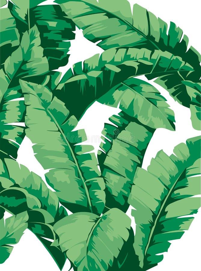 仿造香蕉树和叶子它是白色背景、平的线传染媒介和例证的一个热带植物 向量例证