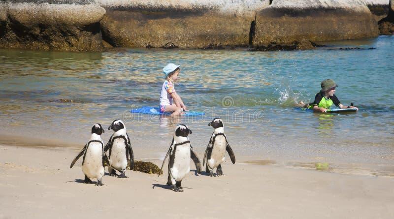 企鹅和孩子 免版税库存图片